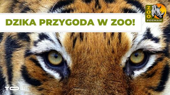 ZOO w Poznaniu zaprasza na dziką przygodę! Bilety kupisz online!